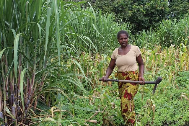 Pelekelo Mubuyaeta leaves her maize and sugar cane field at midday after working from 6am to prepare lunch for her family in the Barotse Floodplain, Zambia.