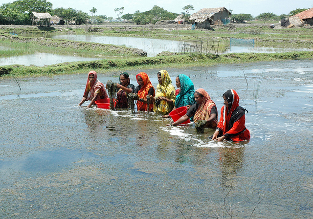 Women in aquaculture, Bangladesh.