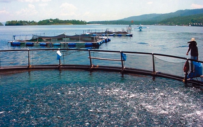 Investment in sustainable aquaculture essential, floating cages in the Philippines. Photo credit Wilfredo Yap