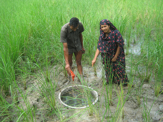 Fish Habitat Development Ring in Bangladesh.