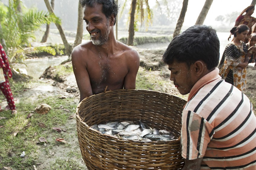 Better aquaculture technologies to improve efficiency can greatly increase production. Fish farmers in rural Bangladesh carry home the harvest. Photo by Felix Clay.