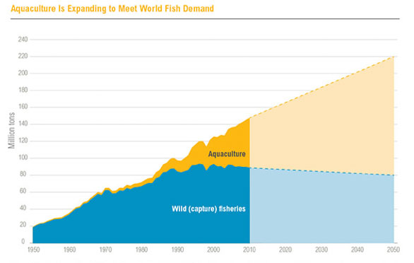 "Source: Historical data 1950-2010:FAO. 2014. ""FishStatJ."" Rome:FAO. Projections 2011-2050:Calculated at WRI, assumes 10 percent reduction in wild fish catch between 2010 and 2050, and linear growth of aquaculture production at an additional 2 million tons per year between 2010 2050."