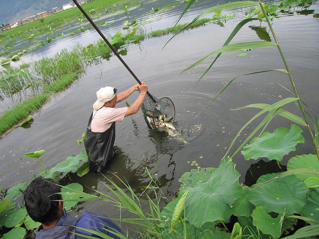 Aquaculture, China.