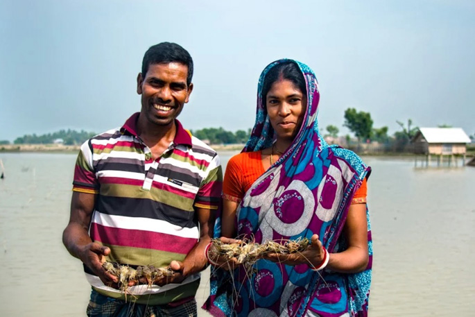 shrimp-farming-bangladesh