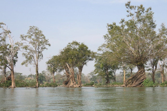 Forest habitat in the Mekong mainstream