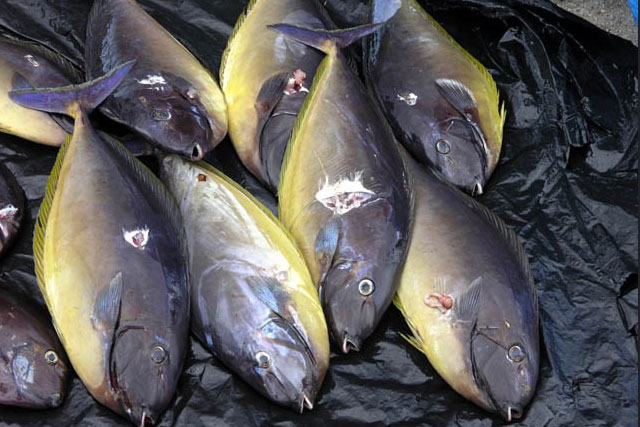 Fish, Solomon Islands.