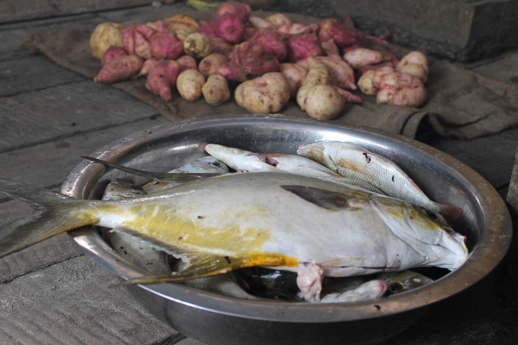 This dish of trevally fish and home-grown sweet potatoes represent some of the staple foods in the Solomon Islands diet. Pip Cohen, 2016.