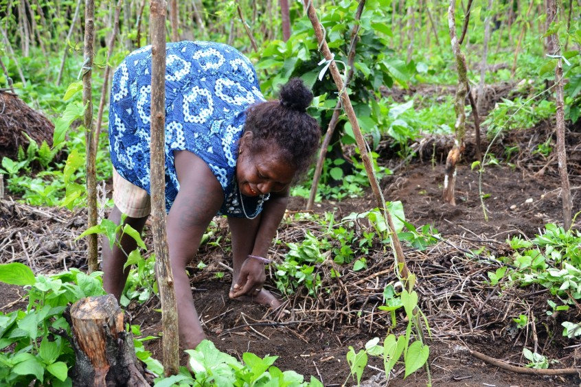 Woman weeds her small agricultural plot, Solomon Islands. Jan Van Der Ploeg, 2016.