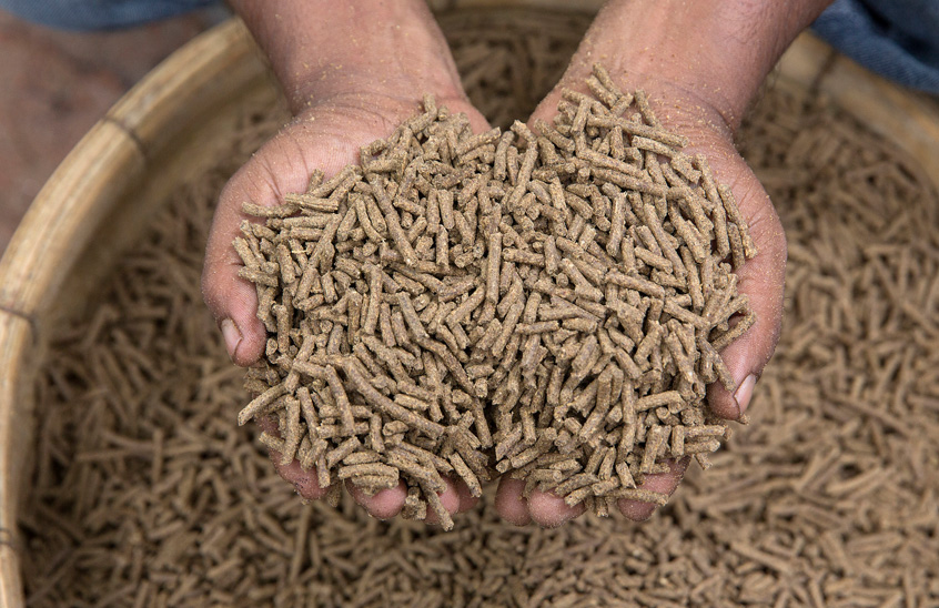 Fish feed in a local factory in Jessore, Bangladesh. Photo by Yousuf Tushar.