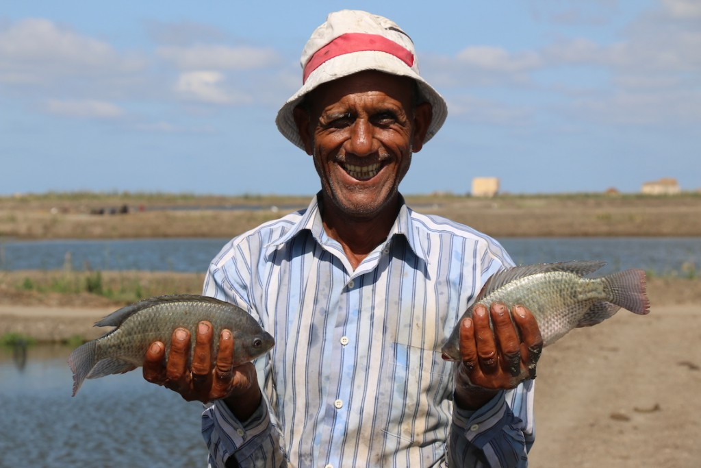 Fish farmer Samir Seliman Ali from Kafr El-Sheik in Egypt with some his tilapia. Kate Bevitt, 2016.