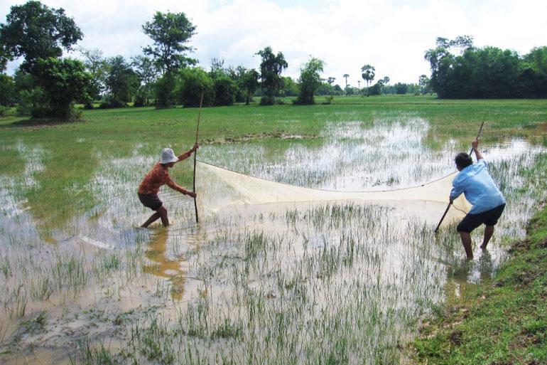 Rice field fisheries, Cambodia. Photo by Jharendu Pant, 2009.