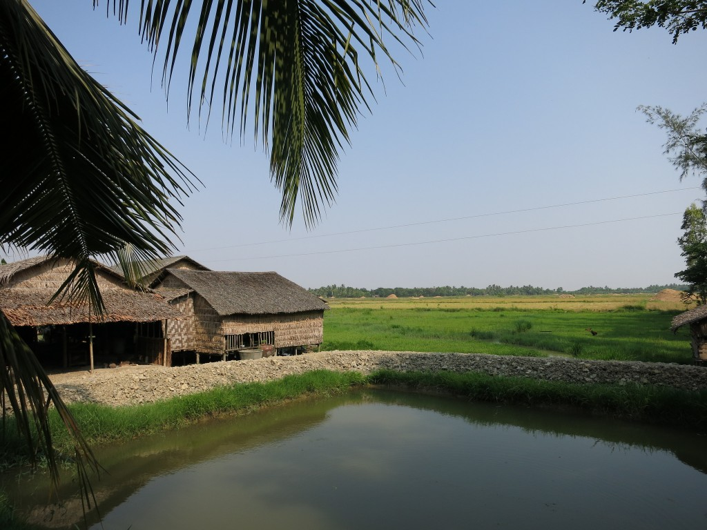 Fish pond in Dedaye Township, Ayeyarwaddy Delta Region, Myanmar. Photo by Zizawah.