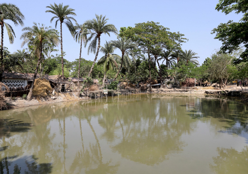A pond being used for polyculture of small fish, carp and rui in Jessore, Bangladesh.