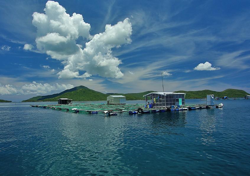Aquaculture cages, Van Phong Bay, central Vietnam.
