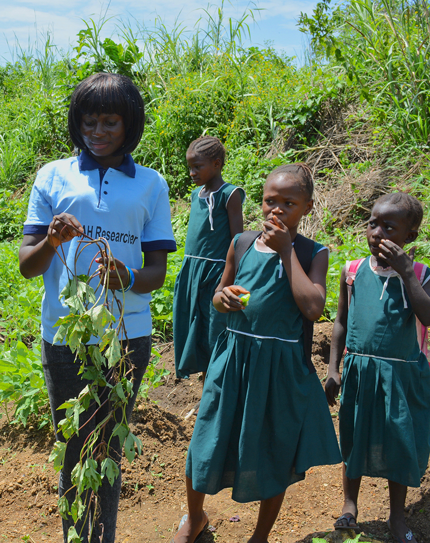 Students learn how to plant sweet potato vines during learning days with primary schools in Tonkolili, Sierra Leone.
