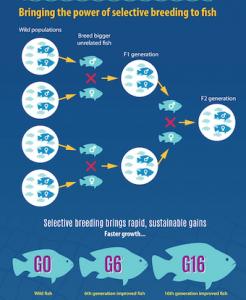 Fish Breeding Infographic2