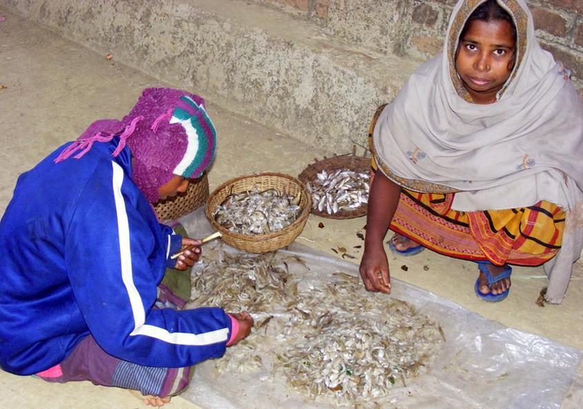 Sorting through the dried fish, Bangladesh. Photo by Martin Van Brakel, 2007