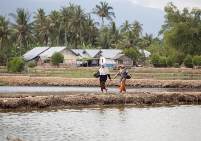 Women walk along reconstructed fish ponds, Bireuen, Indonesia. Photo by Mike Lusmore.