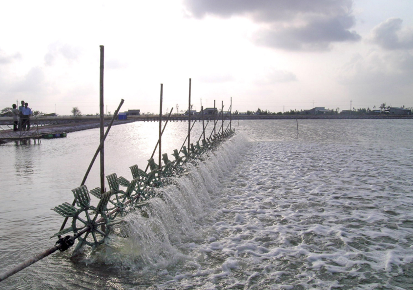 The sustainability of farmed shrimp: A closer look at greenhouse gas