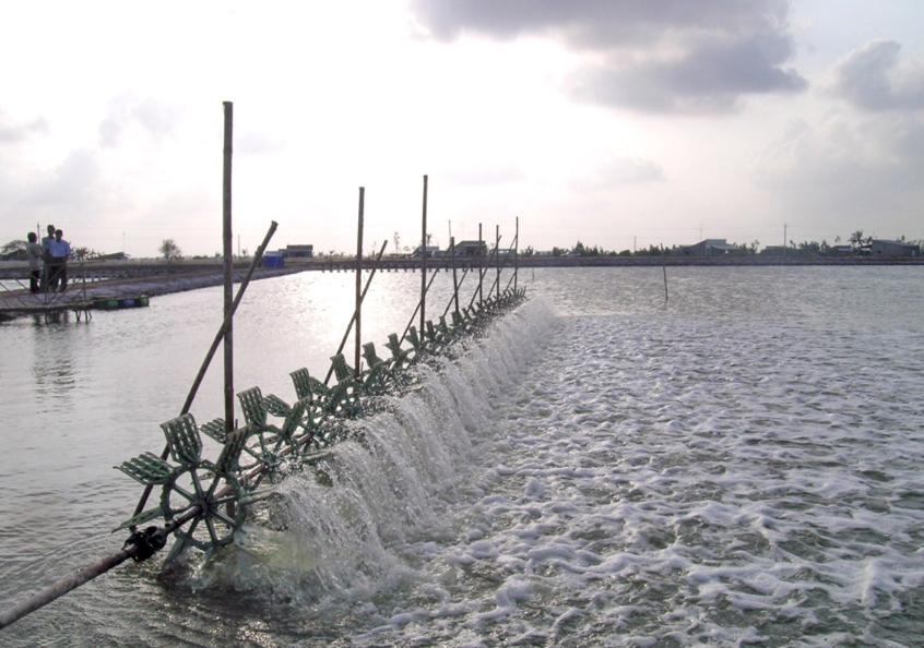 Aerating a shrimp pond in Bac Lieu province, Vietnam. Photo by Mark Prein, 2011.