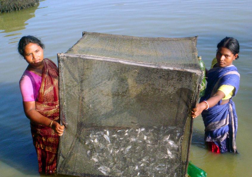 Adivasi cage farmers in Bangladesh. Photo by Mehadi.