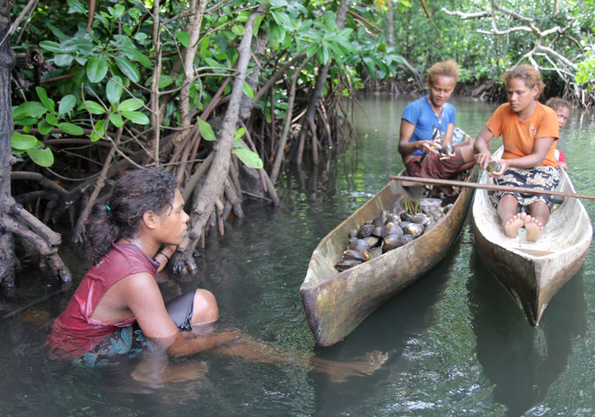 Women removing the shell from mangrove mudshells in Malaita, Solomon Islands. Photo by Wade Fairley.