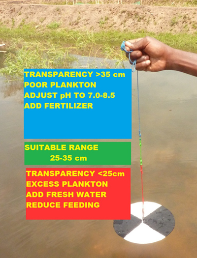 Using the modified Secchi disk, farmers can check water transparency based on color to decide whether or not to apply fertilizer.