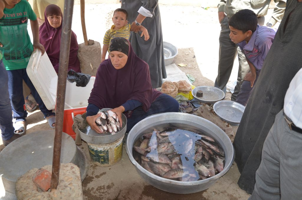 Women fish retailers in Shakshouk, Fayoum, Egypt.