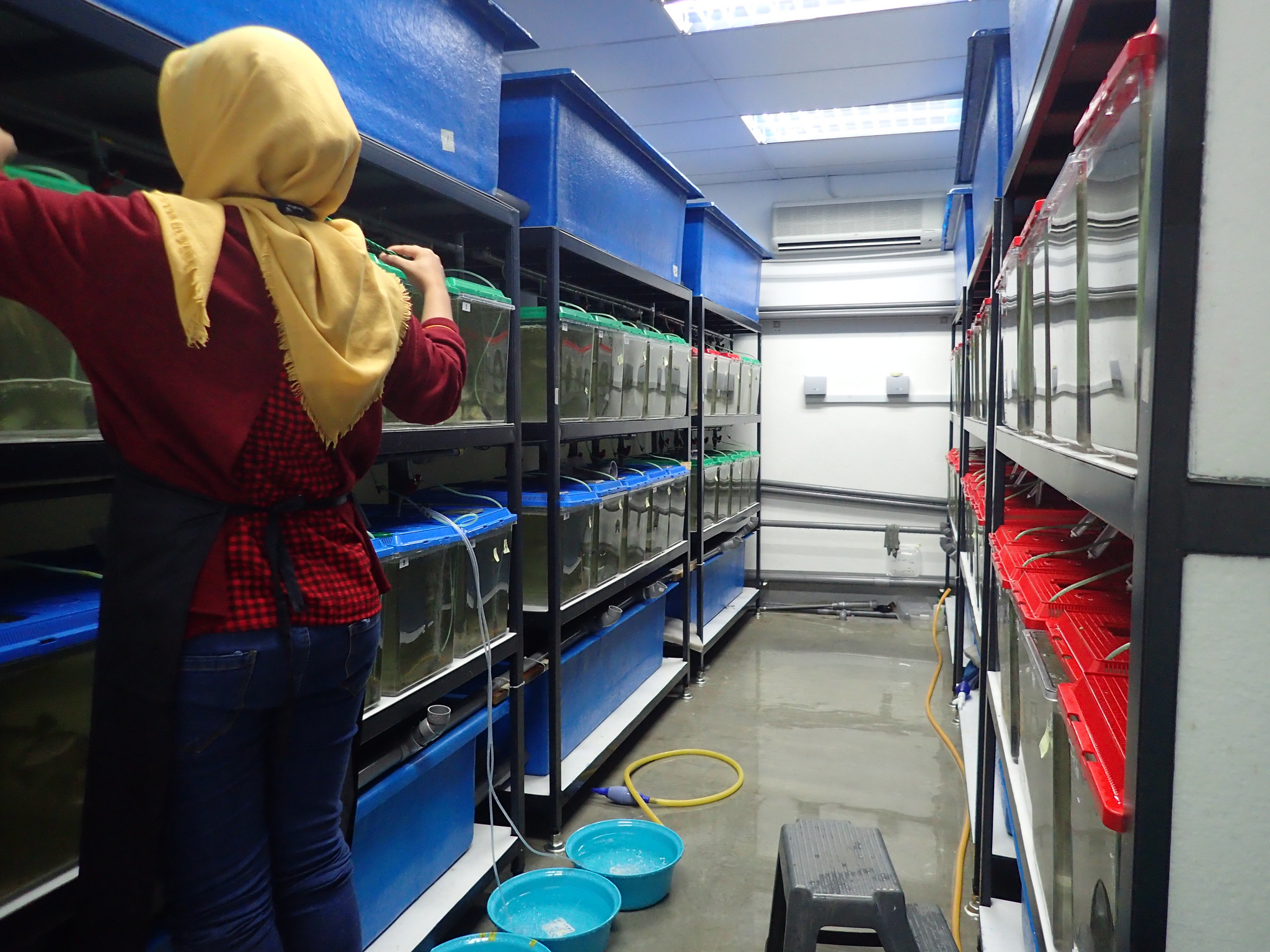 Novel fish feed ingredient boosts tilapia growth, new study