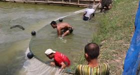 Myanmar aquaculture drives development, shows growth potential