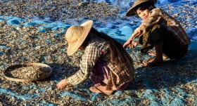 Towards a gender-equal fisheries sector in Myanmar