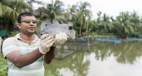 Global tilapia industry under threat from highly contagious disease