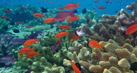 Coral reefs may not be doomed, but we should act as if they are