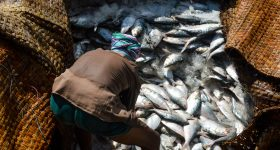 Food systems approach key to balancing biodiversity, livelihoods