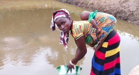 Aquaculture boosts food security in post-Ebola Sierra Leone