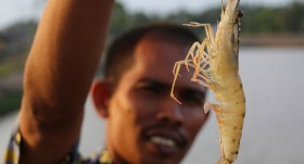A model for the eco-transformation of the shrimp industry