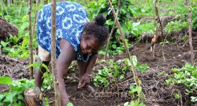 Linking gender and global environmental change research