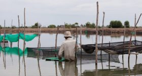 Aquaculture and the environment: Getting the balance right