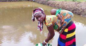 Modified Secchi disk improves fish farm management for smallholders in Sierra Leone