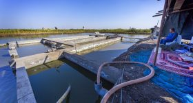 How aquaculture in Africa is benefiting from new technologies and best management practices