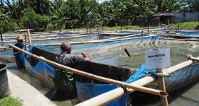 Pathway to prosperity: Aquaculture in Timor-Leste set to grow after 10 years of development